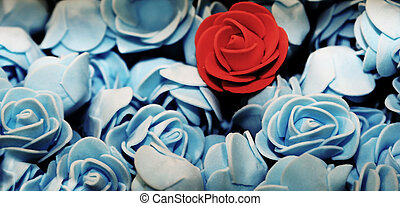 red rose on the many blue roses