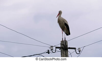 Alone Stork Stands on a Pillar of High Voltage Power Lines on a Sky Background. Stork on a Pole. Summer day.