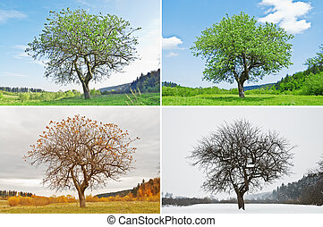 season - alone tree in for season