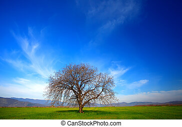 alone tree in spring time