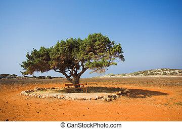 Alone tree in stone desert