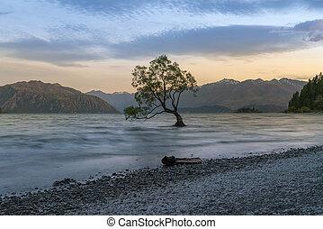 Alone tree in Wanaka lake during sunset