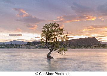 Alone tree in Wanaka water lake