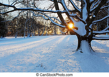 Alone tree in winter park.