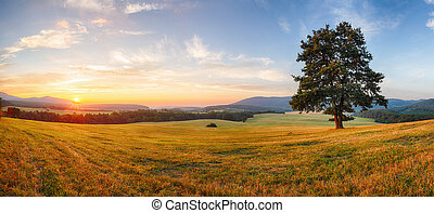Alone tree on meadow at sunset with sun - panorama
