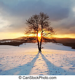 Alone tree on meadow at winter with sun rays