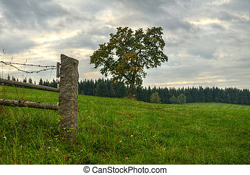 Alone tree standing on a meadow surrounded by woods and an old fence. Beautifully drawn evening storm sky. Spiritual metaphor fence as gate.