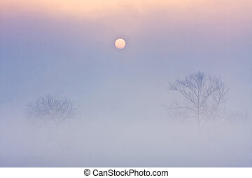 Alone trees on meadow at sunset with sun and mist