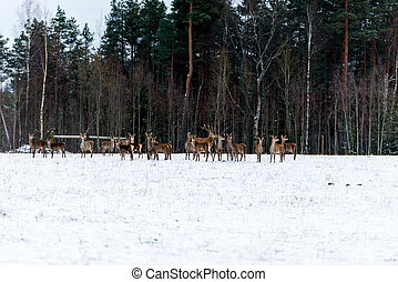 Along the edge of the forest walking bunch of deer.