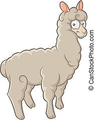 alpaca - color funny character fluffy alpaca
