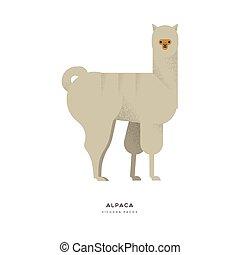 Alpaca wild animal on isolated background