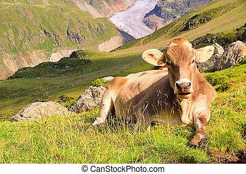 alpe, mucca, 22