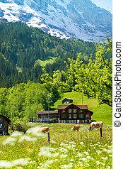 alpen, achtergrond