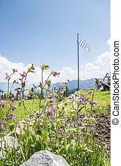 alpes, fleurs