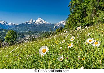 alpes, hermoso, bávaro, primavera, alemania, flores, watzmann