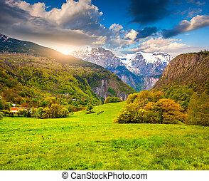 alpes, meadows., ensoleillé, matin, france., alpin