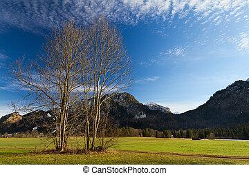 alpes, neuschwanstein, bávaro, alemania, castillo