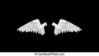 alpha, blanc, ailes, ange, canal