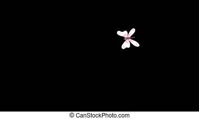 alpha, blanc, mouches, papillon