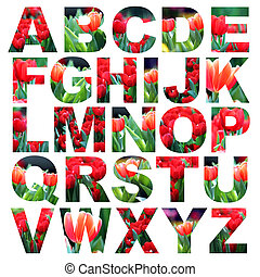 alphabet a to z made from tulips flower picture