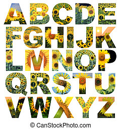 alphabet a to z made from lotus flower picture