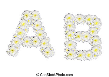 alphabet AB , White Flower isolated on white background