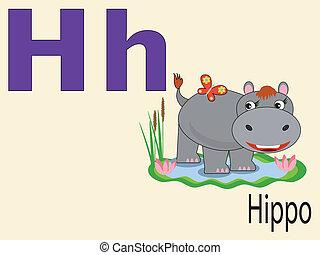 alphabet, animal, h