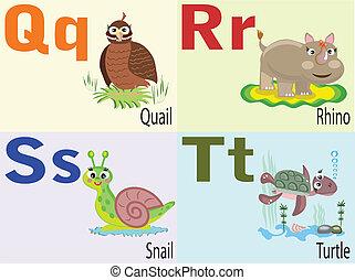 alphabet, animal, q