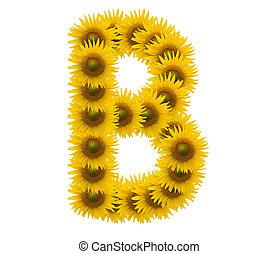 alphabet B, sunflower isolated on white background