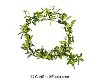 Alphabet creeper flower isolated on white background