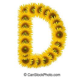 alphabet D, sunflower isolated on white background