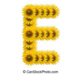alphabet E, sunflower isolated on white background
