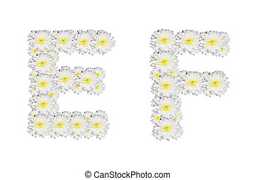 alphabet EF , White Flower isolated on white background