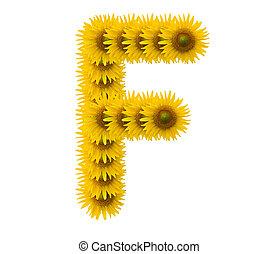 alphabet F, sunflower isolated on white background