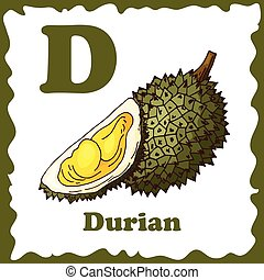 Alphabet for kids with fruits. Healthy letter abc D-Durian