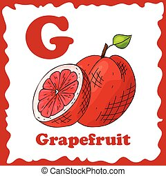 Alphabet for kids with fruits. Healthy letter abc G-Grapefruit