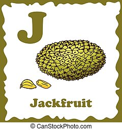 Alphabet for kids with fruits. Healthy letter abc J-Jackfruit