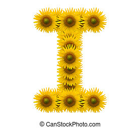 alphabet I, sunflower isolated on white background