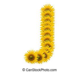 alphabet J, sunflower isolated on white background