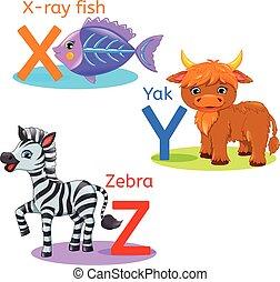 XYZ alphabet wildlife: x-ray fish; yak, zebra.