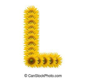 alphabet L, sunflower isolated on white background