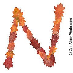 alphabet - letter  n made of oak autumn leaves