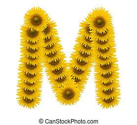 alphabet M, sunflower isolated on white background