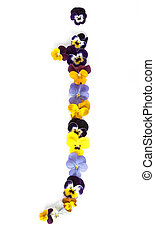 Alphabet made from pansy flowers, letter j