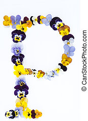 Alphabet made from pansy flowers, letter P