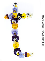 Alphabet made from pansy flowers, letter t
