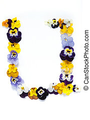 Alphabet made from pansy flowers, letter U