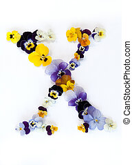 Alphabet made from pansy flowers, letter X