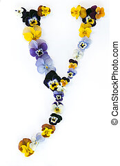 Alphabet made from pansy flowers, letter Y