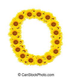 alphabet O , sunflower isolated on white background